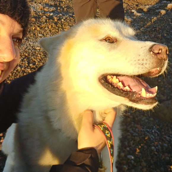 Viaggiare col cane in Islanda: si può?