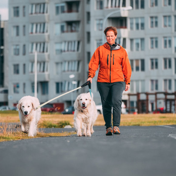 Quando Reykjavík bandì i cani