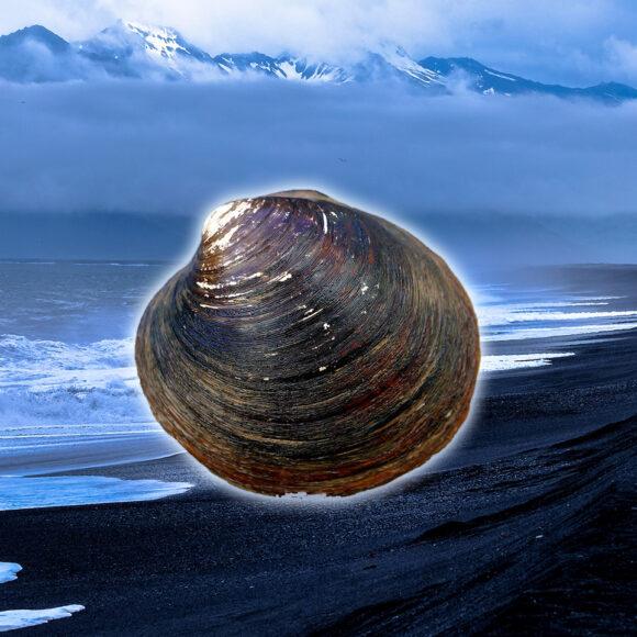 Il curioso animale più longevo d'Islanda