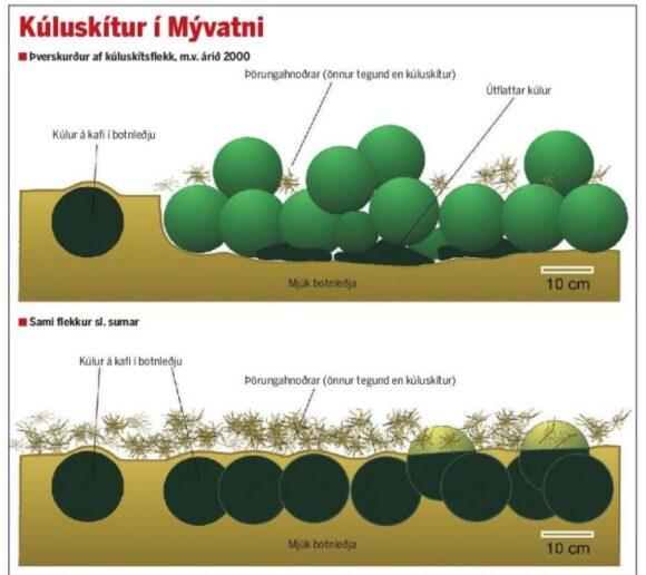 Ritaglio di giornale che illustra come le alghe vengano coperte dai sedimenti