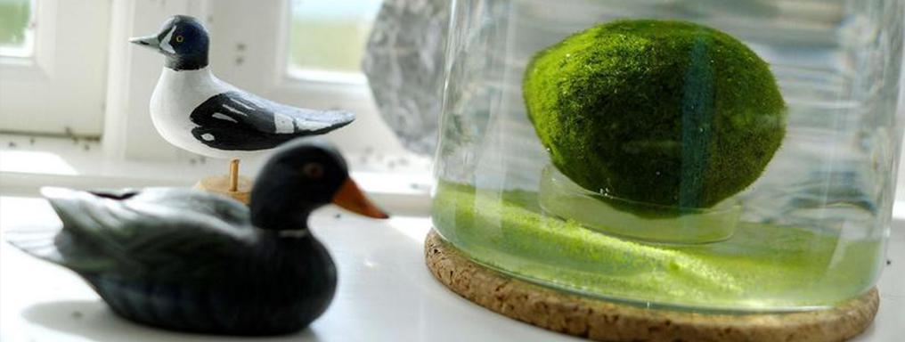 Alga racchiusa in un vasetto, attorno piccole statuine in legno